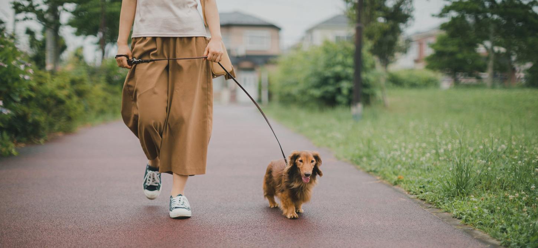 ドッグスマイルファクトリー|犬のしつけ方を覚えたい!初心者もプロ並の技術を習得!|東京都中野区